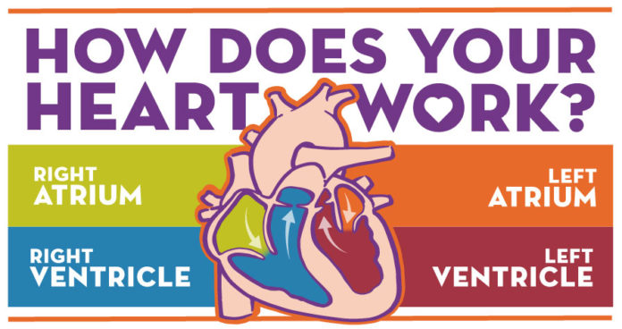 Infographic-How-Does-Your-Heart-Work-Feature