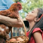 6 Things to Know About Backyard Chickens